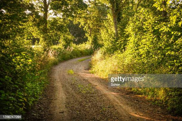 a narrow forest road in deciduous forest in summer in the evening sun - エーランド ストックフォトと画像