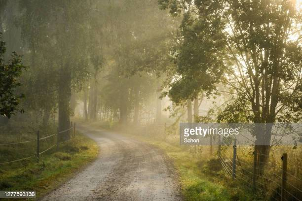 narrow forest road leading through forest and pasture in fog in autumn - vaxjo stock pictures, royalty-free photos & images