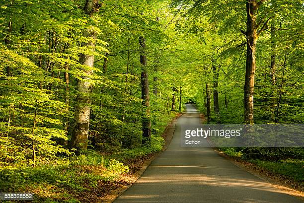 A narrow forest road