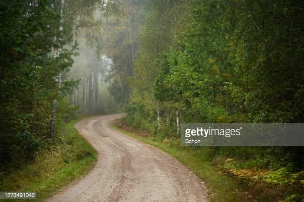 narrow gravel road in through forest in fog in autumn - 松林 ストックフォトと画像