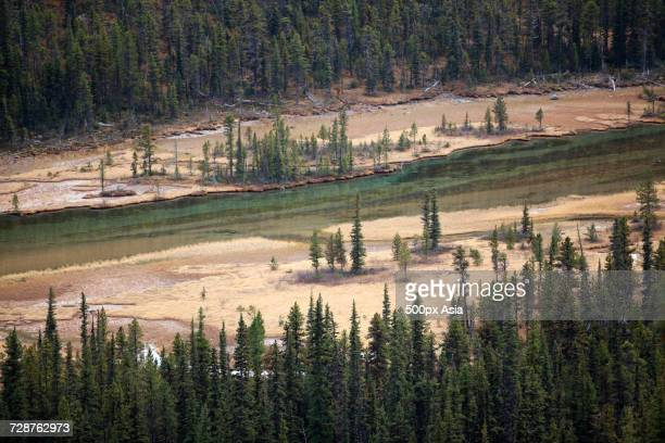 narrow mountain river and coniferous forest, canada - image stock pictures, royalty-free photos & images