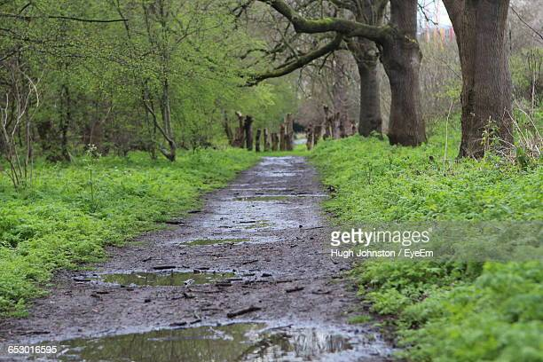 Narrow Pathway Along Trees In Forest