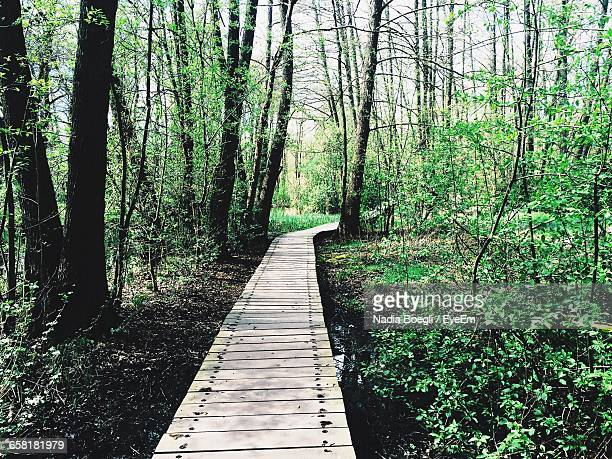 narrow pathway along trees in forest - narrow stock pictures, royalty-free photos & images