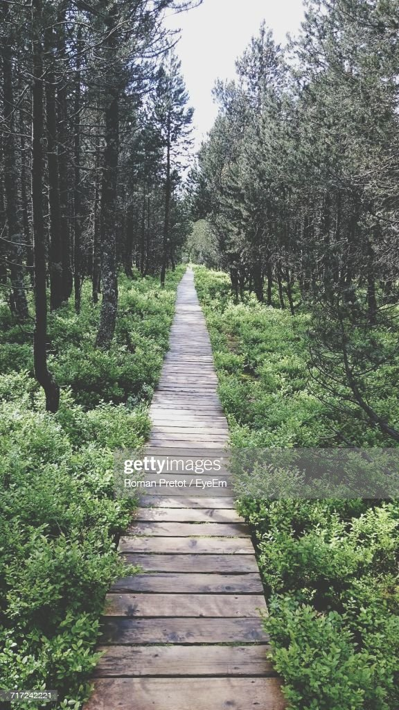 Narrow Pathway Along Trees In Park : Stock-Foto