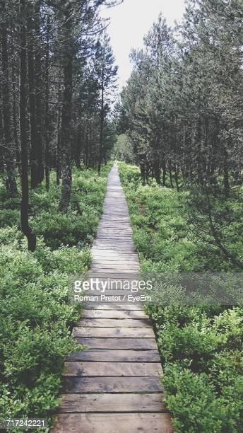 narrow pathway along trees in park - roman pretot stock-fotos und bilder