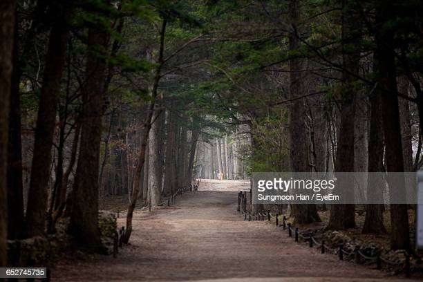 narrow pathway along trees - jeonju stock pictures, royalty-free photos & images