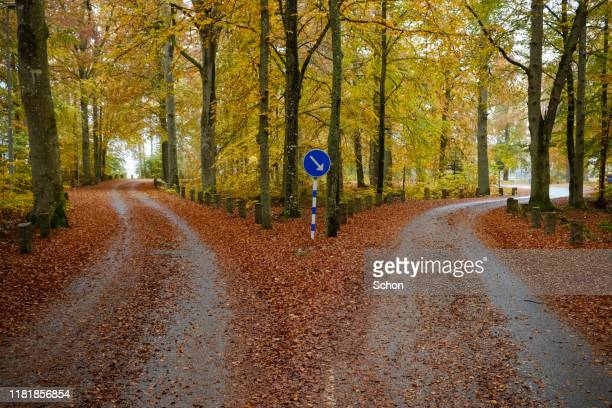 narrow road in autumnal beech forest dividing into two roads - forked road stock pictures, royalty-free photos & images