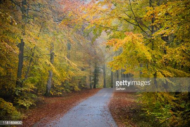 narrow road through autumn colored beech forest in autumn in fog - vaxjo stock pictures, royalty-free photos & images