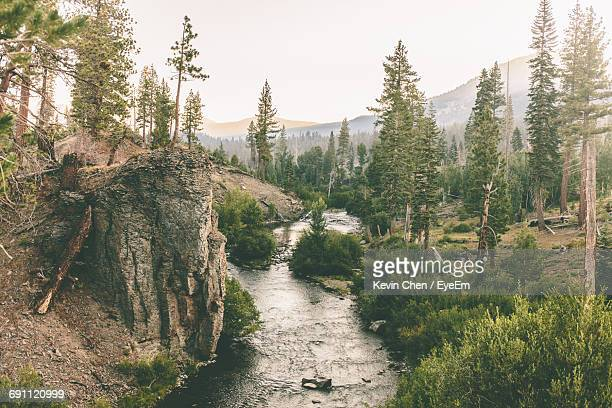narrow stream along trees on landscape - big bear lake stock photos and pictures