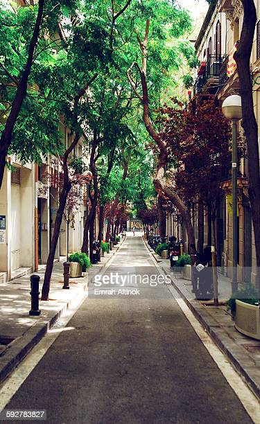 A narrow street with trees in Barcelona
