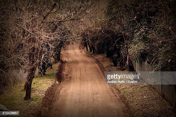 narrow walkway along trees on landscape - andres ruffo stock pictures, royalty-free photos & images