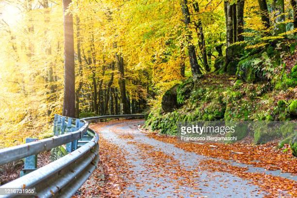 narrow winding road in the forest in autumn. - italia stockfoto's en -beelden