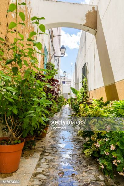 Narrow winding street with a lot plants