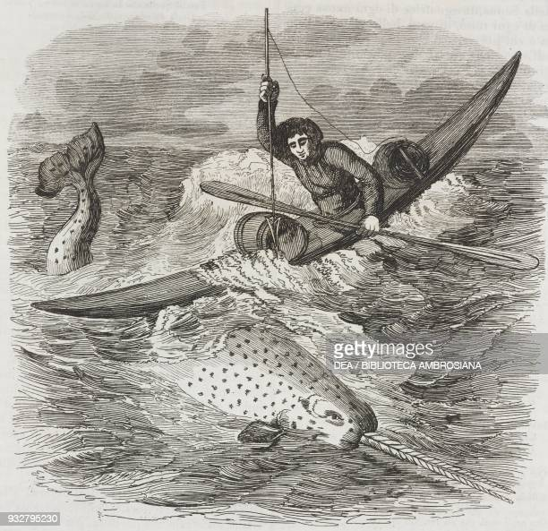 Narwhal or sea unicorn hunting engraving from L'album giornale letterario e di belle arti January 23 Year 7