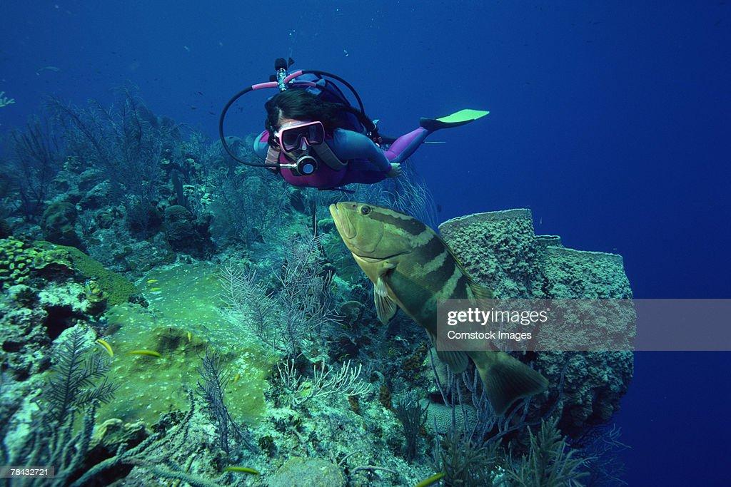 Nassau Grouper and scuba diver , underwater : Stockfoto