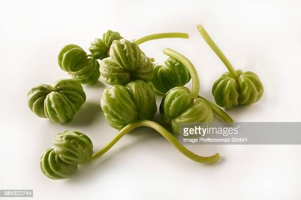 nasturtium seed pods - nasturtium stock pictures, royalty-free photos & images