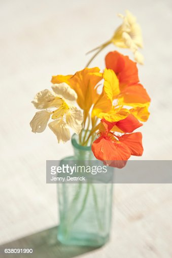 Nasturtiums In Vase High-Res Stock Photo - Getty Images