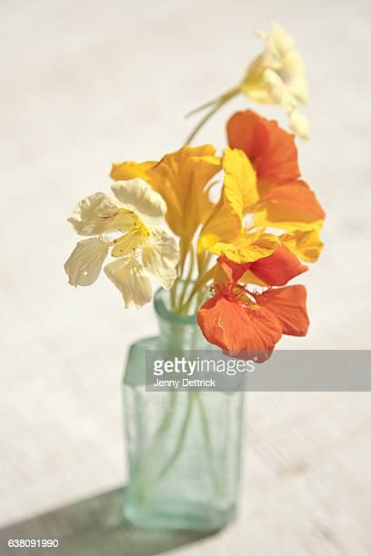 nasturtiums in vase - nasturtium stock pictures, royalty-free photos & images