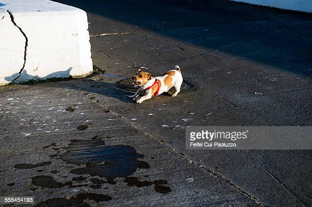 Nasty dog at Portmagee County Kerry Ireland