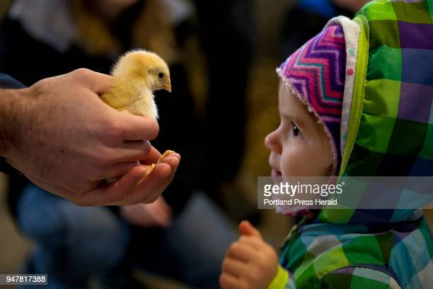 Natalie Daigle of Yarmouth meets a chick held by Nathan Cross an educator at Wolfe's Neck Center during the First Time Farmers program at the center...