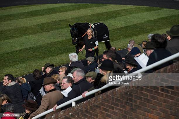 Natalie Turner leads Garde la Victoire in the pre parade ring ahead of the JLT Novices' Steeplechase at the Cheltenham festival on March 17 2016 in...