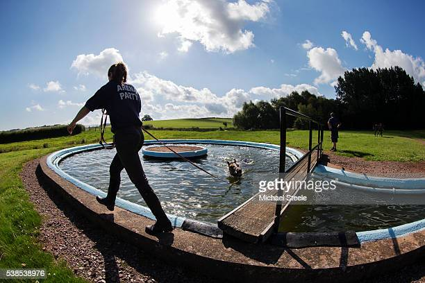 Natasha Mallon assists Toowoomba in the equine pool at Sandhill Racing Stables on August 7 2015 in Minehead England Sandhill Racing Stables set in...
