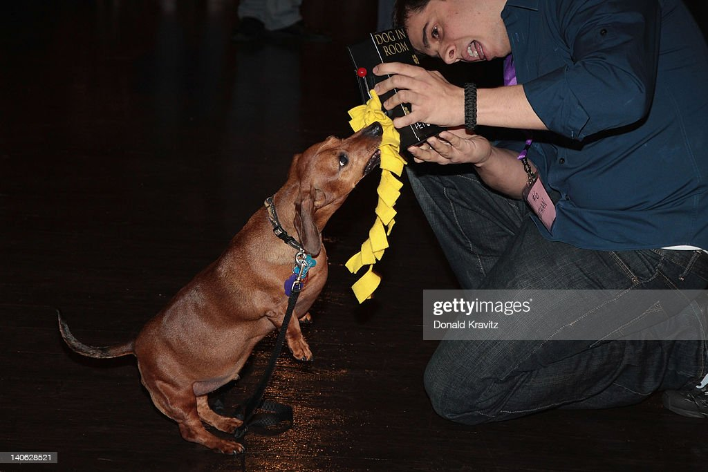 Nathan a Daschund pulls a slot machine handle as he attends the one year anniversary of being pet-friendly at the Showboat Atlantic City on March 3, 2012 in Atlantic City, New Jersey.