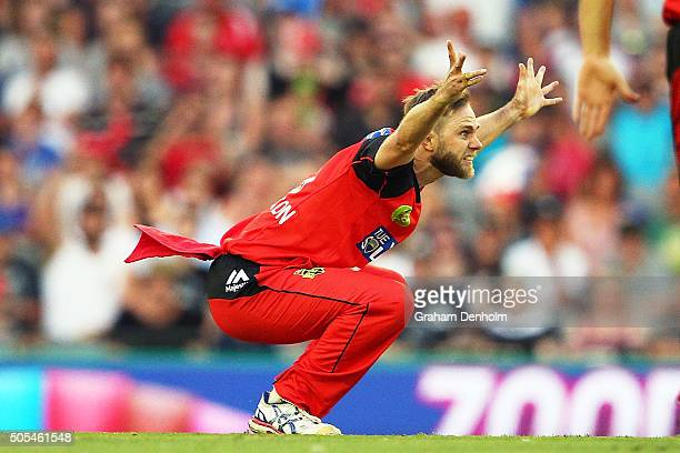 Nathan Rimmington of the Renegades appeals to the umpire during the Big Bash League match between the Melbourne Renegades and the Adelaide Strikers...