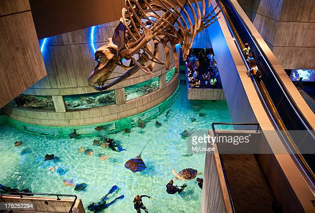 National Aquarium Inner Harbor Baltimore Maryland USA