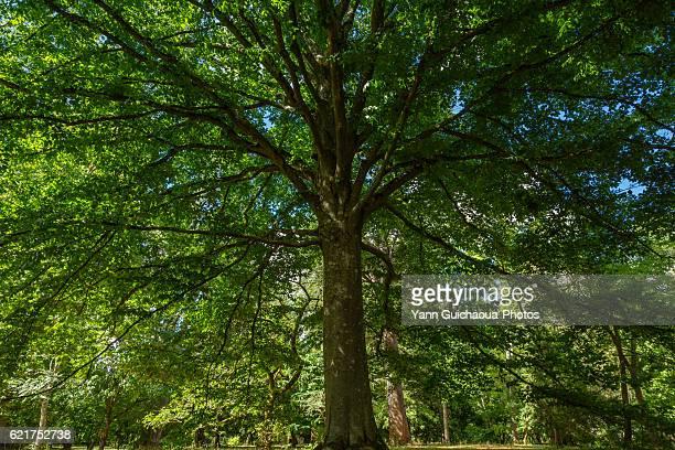 national arboretum of barres, nogent sur vermisson, loiret, france - arboreto foto e immagini stock