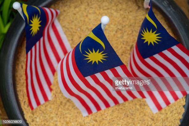 """national flag of malaysia or locally known as """"jalur gemilang"""" over paddy. rice from paddy is a staple food for malaysian. - shaifulzamri stock pictures, royalty-free photos & images"""