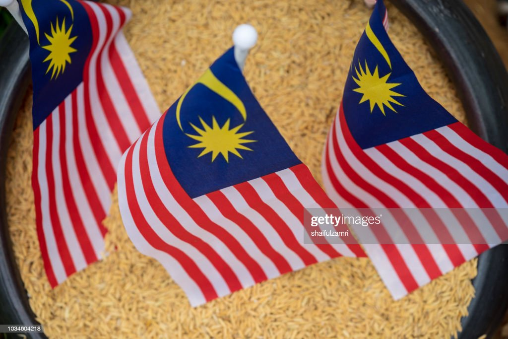National flag of Malaysia or locally known as 'Jalur Gemilang' over paddy. Rice from paddy is a staple food for Malaysian. : Stock Photo