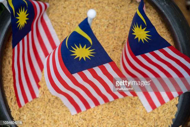 "national flag of malaysia or locally known as ""jalur gemilang"" over paddy. rice from paddy is a staple food for malaysian. - shaifulzamri stock-fotos und bilder"