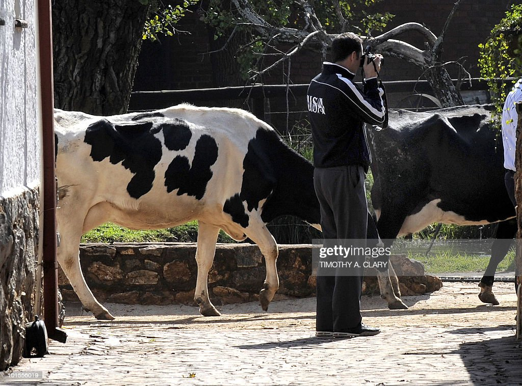 US national football team communications coordinator Neil Buethe takes pictures of his players as cows pass by before a news conference on June 2, 2010 at Irene Farm in the township of Irene, south of Pretoria, in Gauteng Province. The US team is in Pretoria, preparing for the 2010 FIFA World Cup.