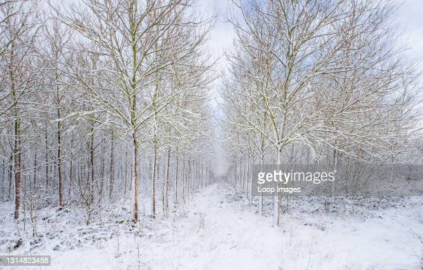 National Forest woodland in winter.