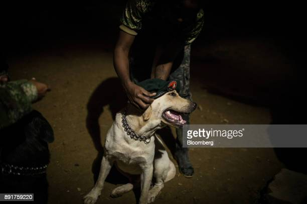 A National Liberation Army guerrilla puts a beret bearing the ELN logo on the group's dog in a remote village in Choco Department Colombia on Friday...