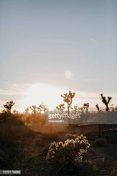 national park at sunset, joshua tree, usa - joshua tree national park stock pictures, royalty-free photos & images