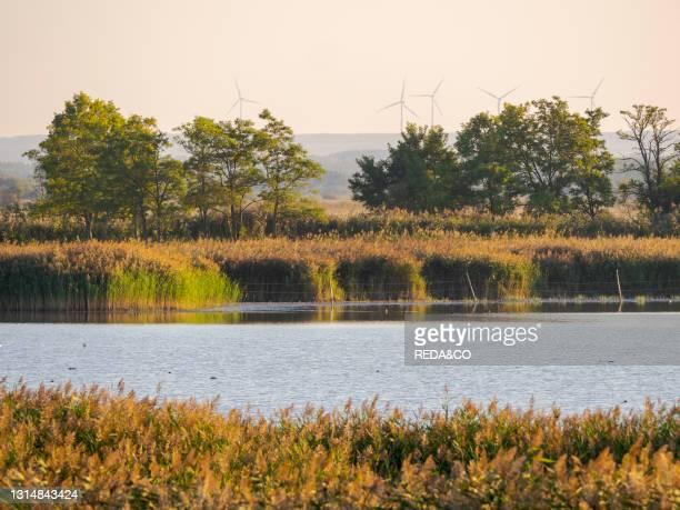 National Park Fertoe-Hansag. Part of UNESCO world heritage Fertoe - Neusiedlersee Cultural Landscape. Europe. Eastern Europe. Hungary.