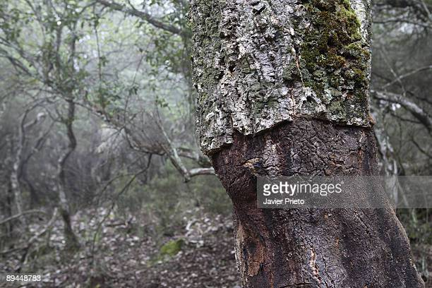 National Park of Monfragüe Caceres Extremadura Virgin meadows and Mediterranean forests National and Biosphere Reserve Cork trees