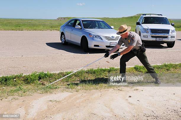 us national park ranger capturing rattlesnake in badlands south dakota - black hills stock pictures, royalty-free photos & images
