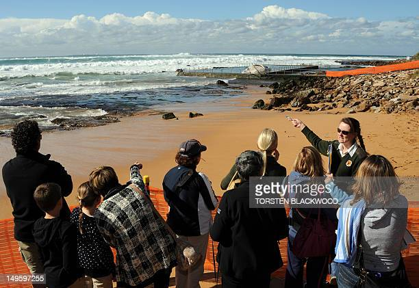 A national parks ranger points out a dead 30tonne humpback whale in the Newport Beach rockpool north of Sydney on August 1 2012 The 116 metre adult...