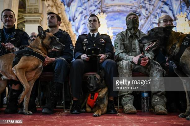 National police dog , a rescuer dog of the Paris firemen brigade and a French army dog wait with their masters prior to receiving a national hero dog...