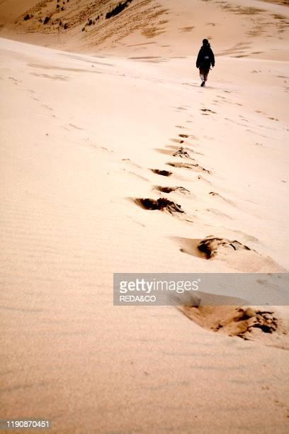 National Recreation Area Sand Dunes Florence Oregon United States of America North America