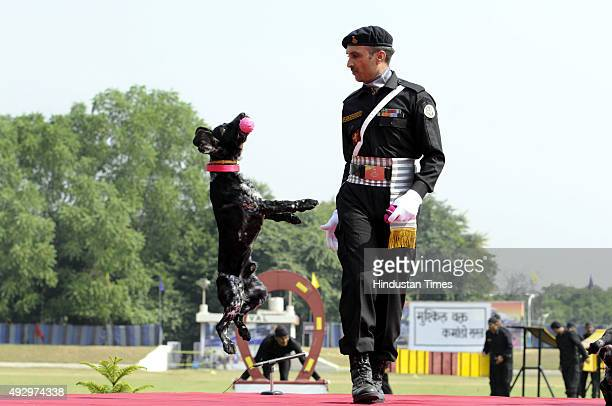 National Security Guards commandos display their skills during a function to celebrate the 31st NSG Raising Day in Manesar on October 16 2015 in...