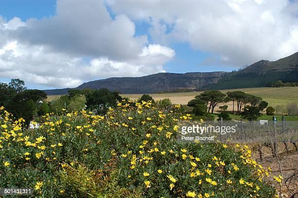 Nationalpark am Kap der Guten Hoffnung bei Kapstadt Südafrika Afrika Straße Reise NB DIG PNr 1299/2005