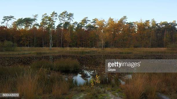 "nationalpark ""de meinweg"" - nationalpark stock pictures, royalty-free photos & images"