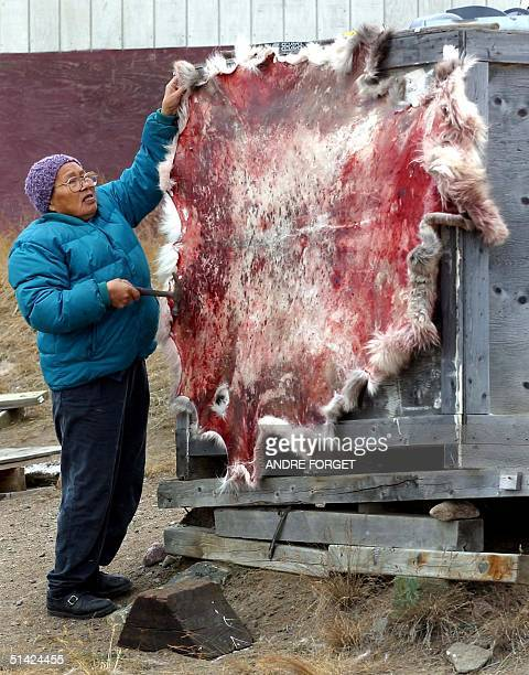 A native Inuit women stretches out a caribou skin in Iqaluit Nunavut Canada 05 October 2002 Britain's Queen Elizabeth II visited Iqaluit 04 October...