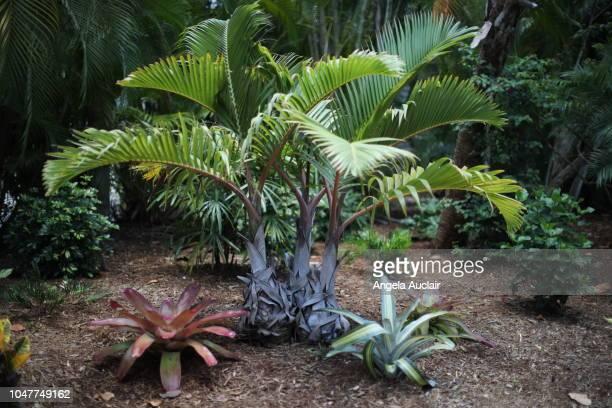 Native Plants of Sanibel in Southwest Florida