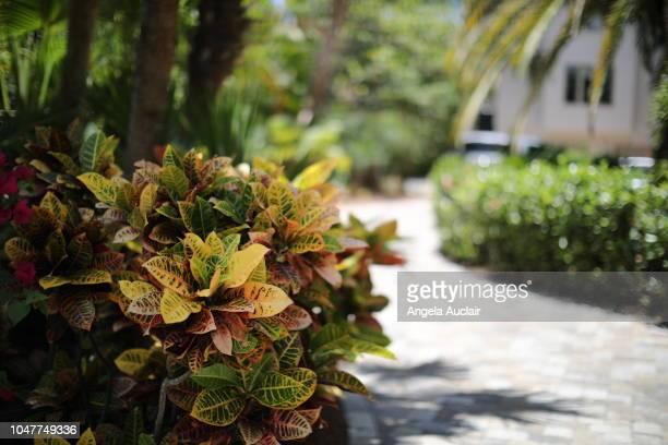 native plants of sanibel in southwest florida - captiva island - fotografias e filmes do acervo