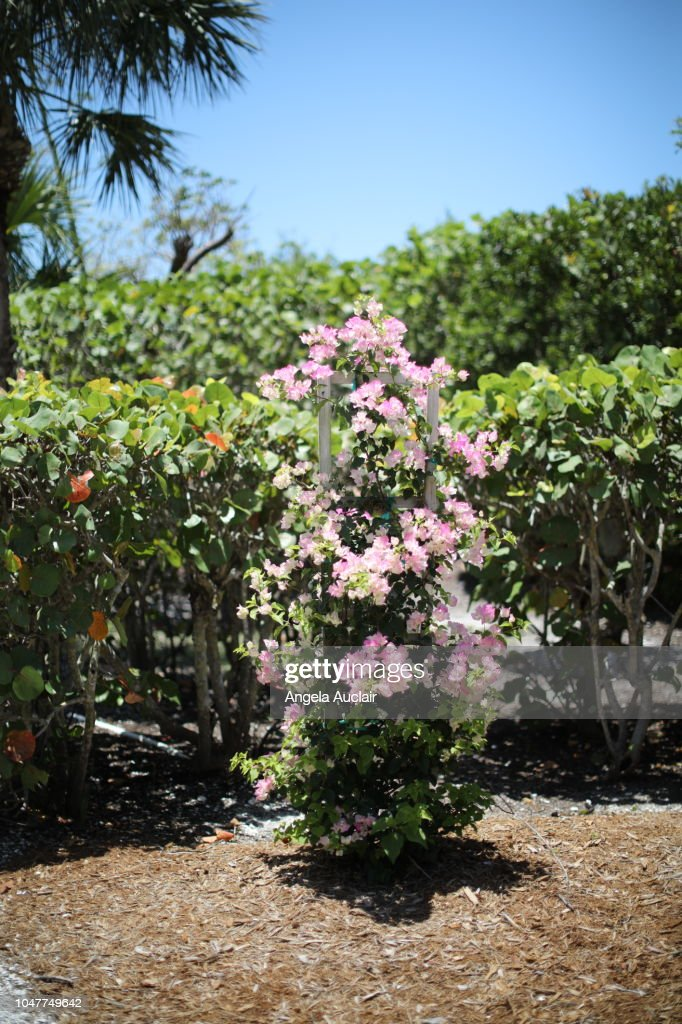 Native Plants Of Sanibel In Southwest Florida High Res Stock Photo